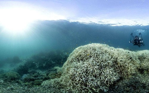 Great Barrier Reef axed from UN climate change report after Australian government intervention