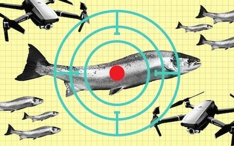 Satellites, drones and autonomous boats: the tech used to combat illegal fishing
