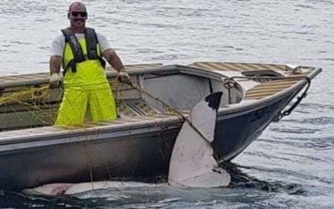 Giant 15ft great white shark caught in net off popular Sydney surf beach