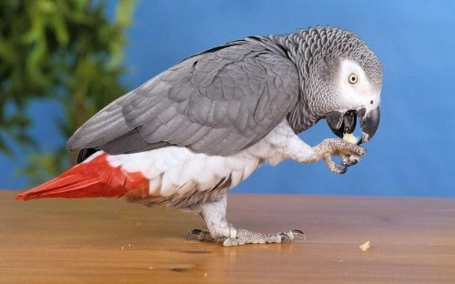 British parrot missing for four years returns speaking Spanish