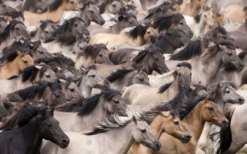 US Government could kill 45,000 wild horses
