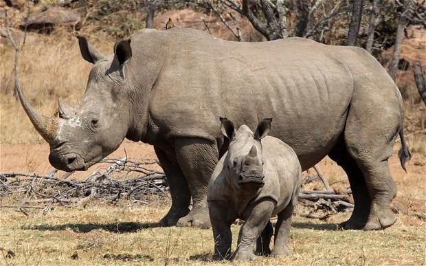 South Africa deploys CSI-style tactics to crack rhino poaching rings