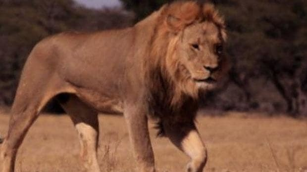 Exclusive: Cecil the Lion's son Xanda killed by trophy hunter