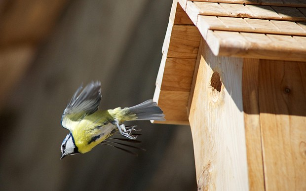 Novelty nest boxes putting garden birds at risk, warns RSPB