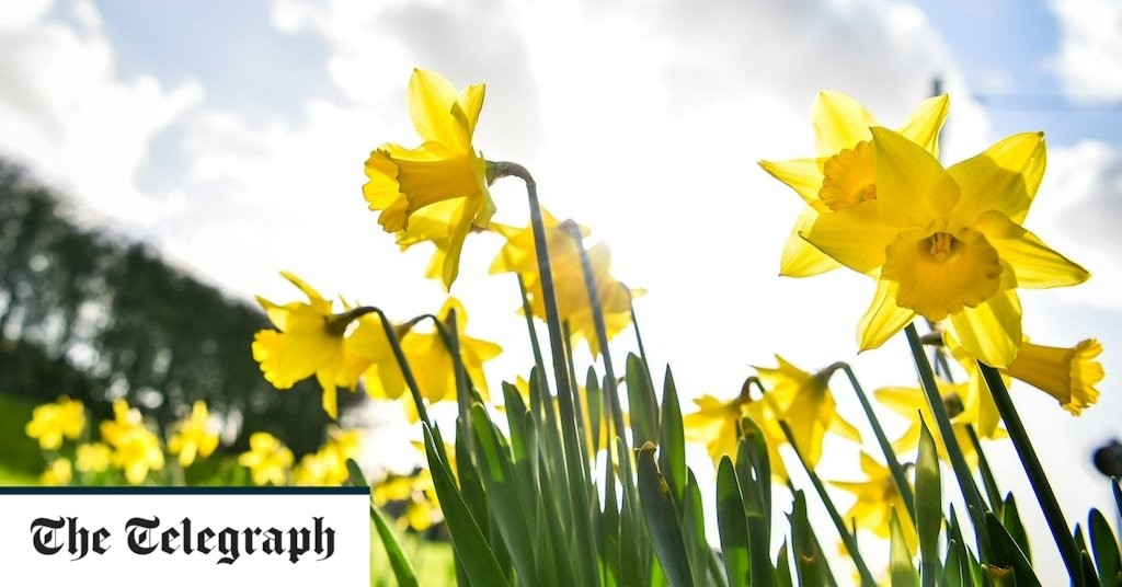Gardeners need to work harder in the autumn because spring is getting drier, Royal Horticultural Society warns