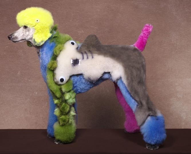 Crazy dog grooming competition - Telegraph
