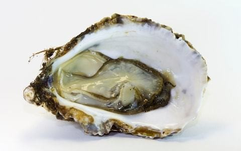 Foreign oysters colonising Britain's coastlines after Government introduced Pacific shellfish to help native stock