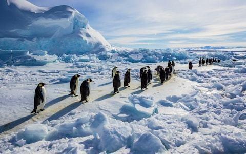 Major emperor penguin breeding ground found to be barren since 2016