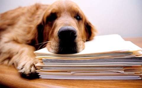 Dog behaviour problems? Here's the ten most common causes