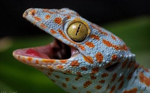 Ban on international sale of rare reptiles, amid concern over growing trade on social media