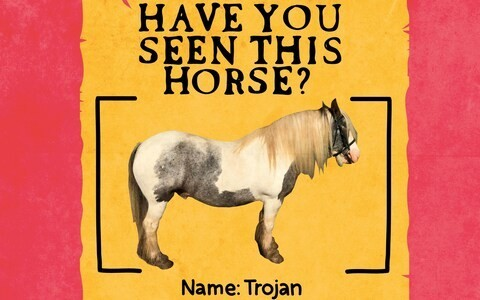 'I bought a horse but he's mysteriously disappeared. Can you help find him?'