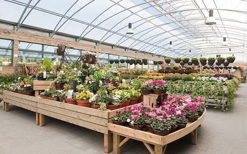 Why the end of Britain's biggest garden centre group could be good news for gardeners