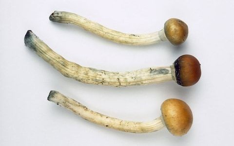 Eight things you didn't know about magic mushrooms