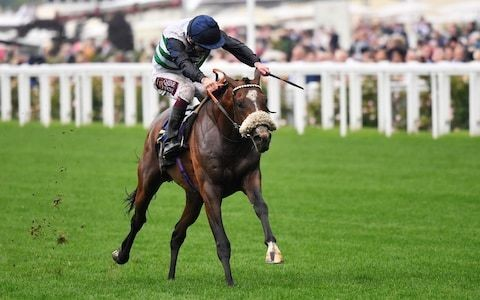Dashing Willoughby the perfect St Leger candidate