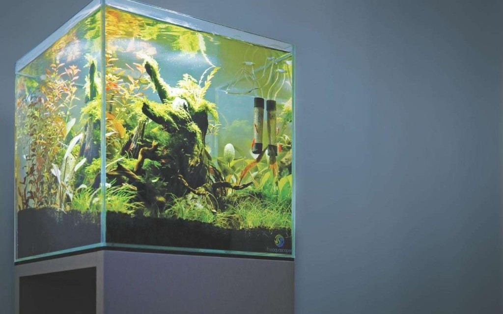 Aquascaping: the addictive hobby that's making gardeners grow underwater