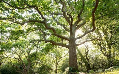 Citizens Assembly lets public consider how UK should meet climate change goals