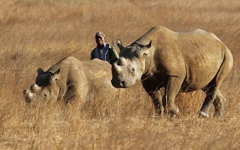 Fake rhino horn invented by Oxford University to flood market and take profit out of poaching
