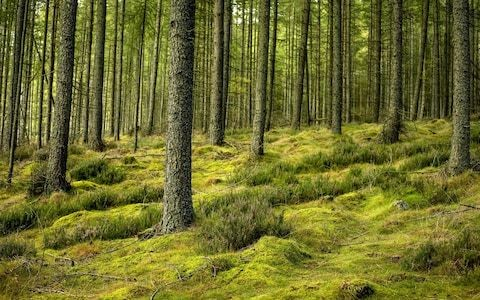 Trees are wonderful things, but they're not the silver bullet that will solve climate change