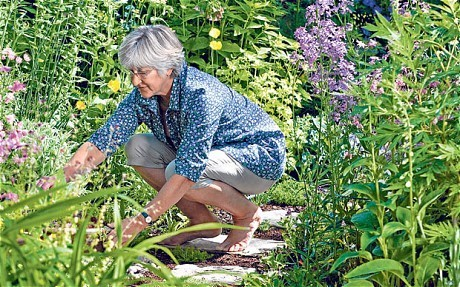 Thorny problems: can I grow perennials from seed in the ground?