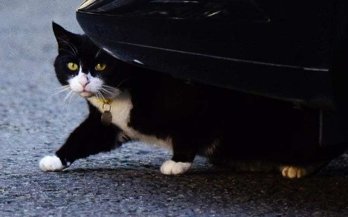 Government keeps warring cats apart - but Palmerston isn't happy about it