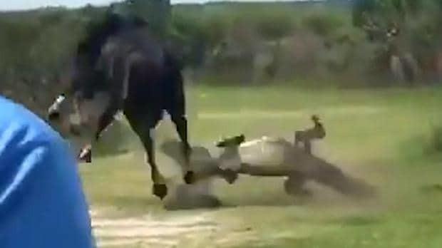 Shocking moment horse attacks alligator and gets bitten in Florida