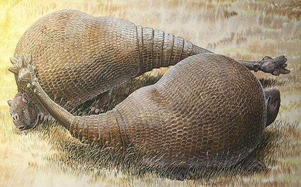 Ancient secrets of giant, armoured mammals revealed in fossil DNA