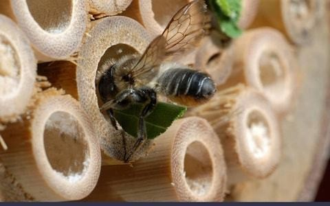 What science reveals about the likes and dislikes of the leaf-cutter bee