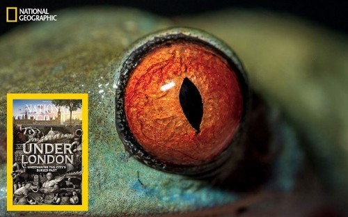 Inside the eye: Nature's most exquisite creation, in pictures - Telegraph