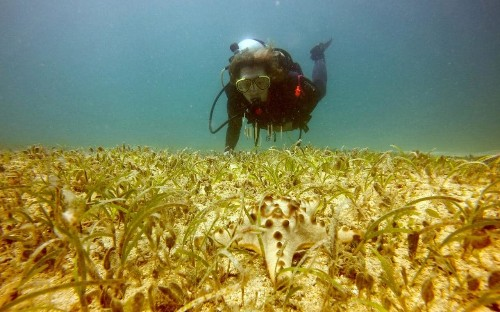Kate Humble: Diving for the weird and wonderful in the Philippines