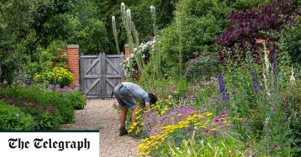 How to keep summer borders looking stunning, by garden expert Helen Yemm