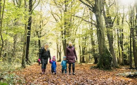 If you go down to the woods today...it will banish the winter blues, say health experts