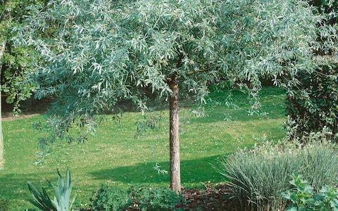 Ken Thompson's last word (and website) on tree planting