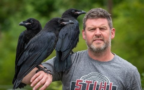 Tower of London ravens to be tamed rather than have wings clipped in humane attempt to stop them leaving the tower