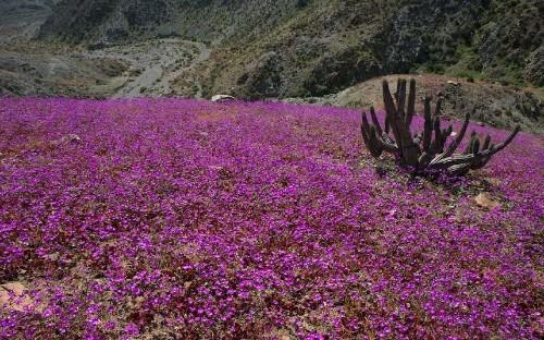 Extreme natural phenomena – and where to see them - Telegraph
