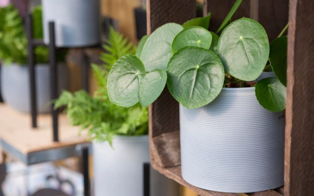 Quick tips: houseplants to faff over, when to cut back border plants and when to repot