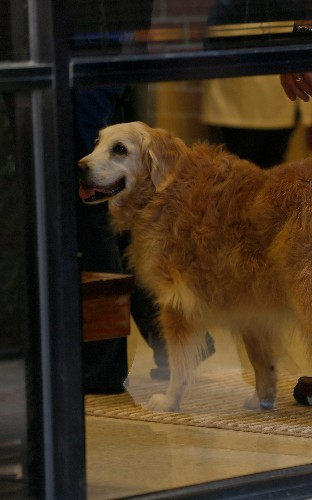 Last surviving 9/11 rescue dog put down - with a hero's send-off