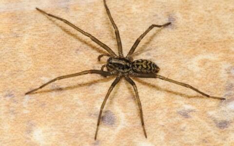 Warm, wet summer causes bumper spider season