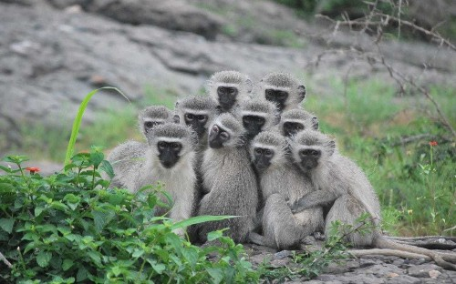 Female monkeys don't trust males, even when they're obviously right