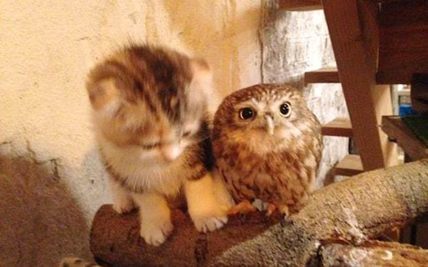 The Owl and Pussycat become chums
