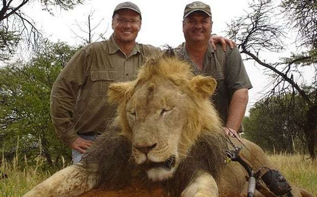 Cecil the lion: Zimbabwe requests extradition of US dentist Walter Palmer over killing