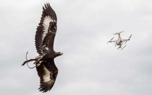 French Air Force turns to eagles to fight terror drone threat