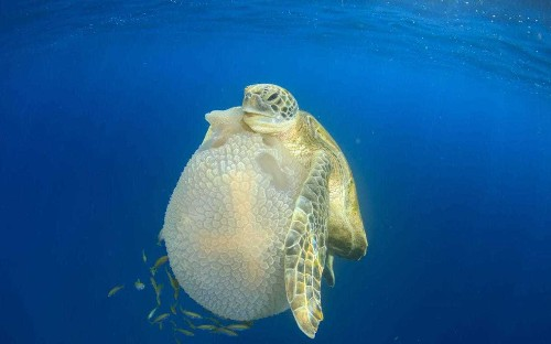 Turtles evolve to use flippers like hands and karate-chop prey
