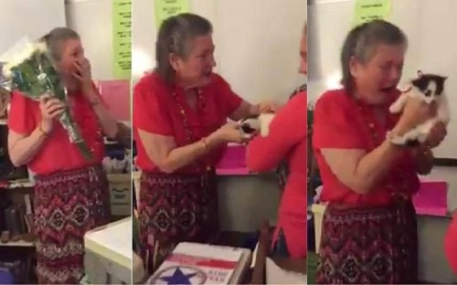 Lovely video shows pupils surprising teacher with kittens because her cat passed away