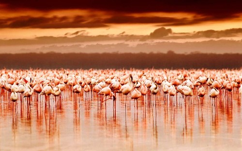 Three great migrations you must witness – on air, land and water