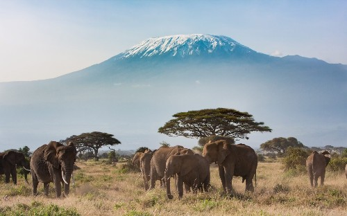 'Disaster' for safaris in Tanzania as government unleashes tourism tax