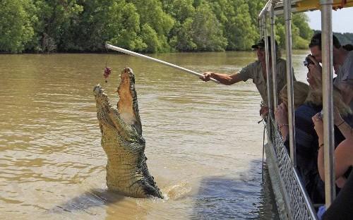 Plans for tourist hub in Australia's biggest national park run into treacherous water amid croc threat
