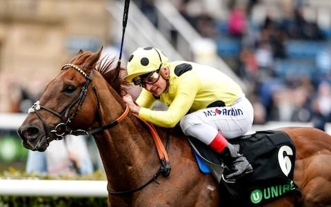 All systems go at Ascot as Zabeel Prince hits form of his life