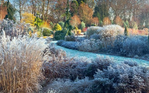 Helen Yemm: how I keep the garden going over the new year