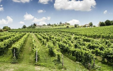 Gourmet Italy: what to eat and drink in Tuscany