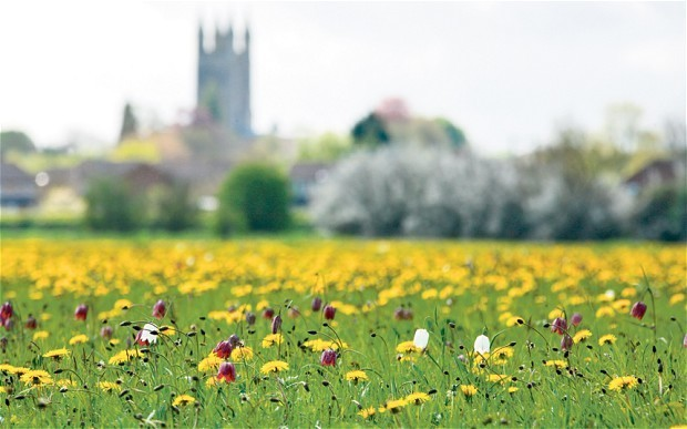 Fritillaries: don't forget these lilies of the field